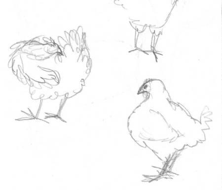 chickens 5 gimp