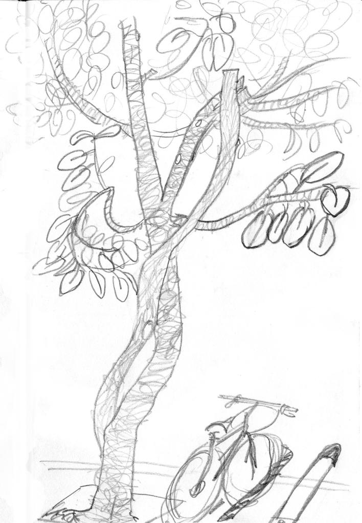 DF sketch004